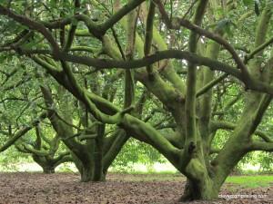avocado orchard