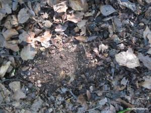 Compost (humus)