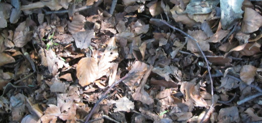 Leaves for composting