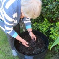 Preparing a worm bin