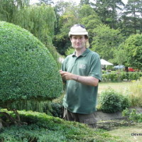 Darren - Asst. Head Gardener at Hever. Trimming Topiary.