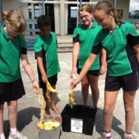 Students collecting waste food