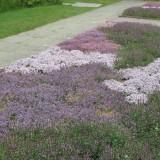 Thyme Gardens at Sissinghurst