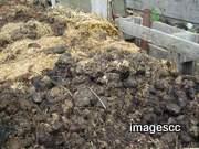composting ingredients